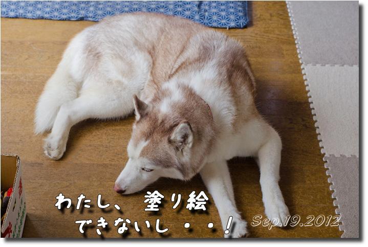 DSC_8761h1.jpg
