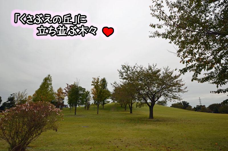 DSC_8858.jpg
