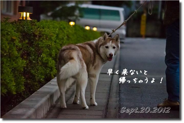 DSC_8935h1.jpg