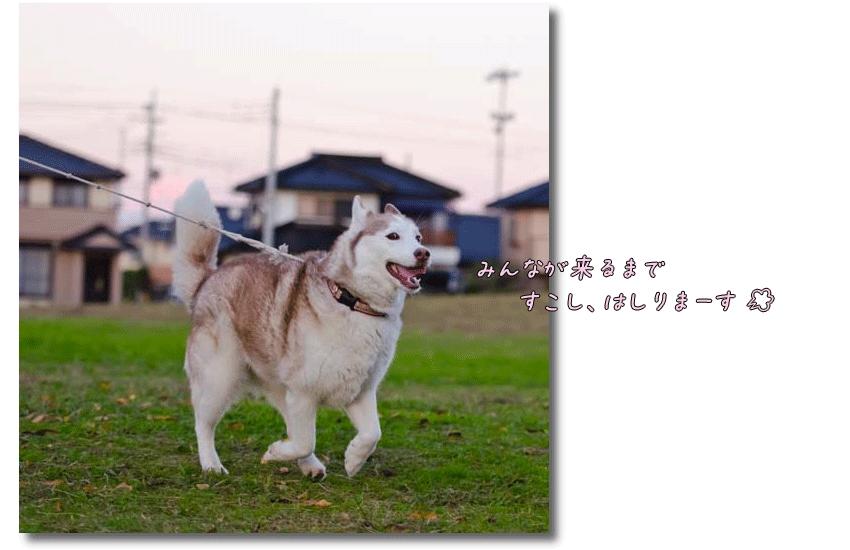 DSC_8968j1.png