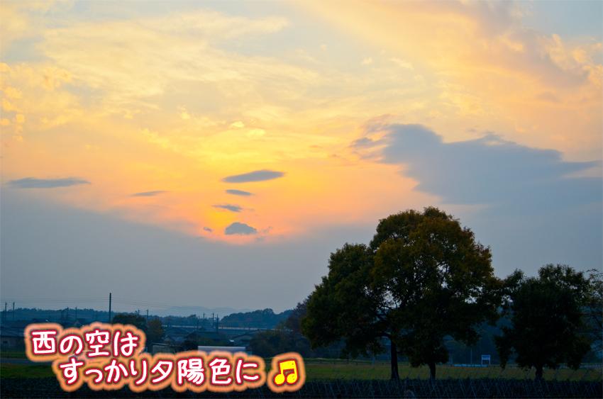 DSC_9052a.jpg