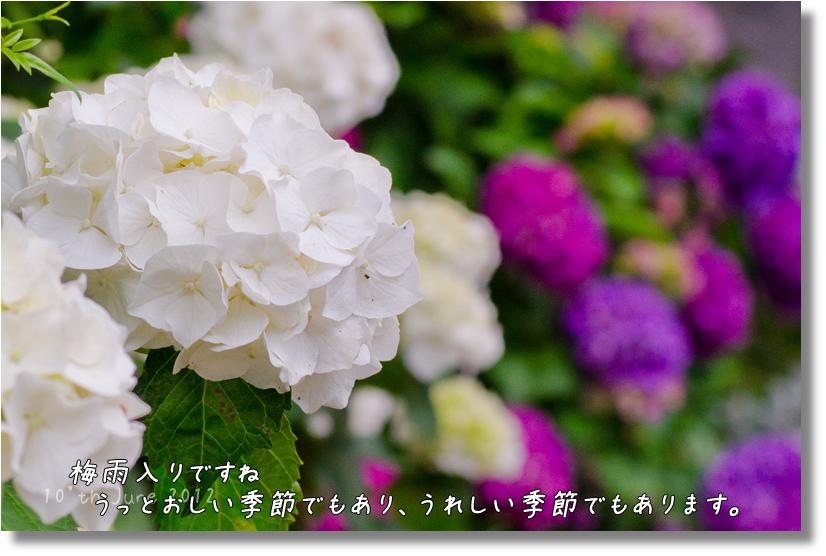 DSC_9065f1.jpg