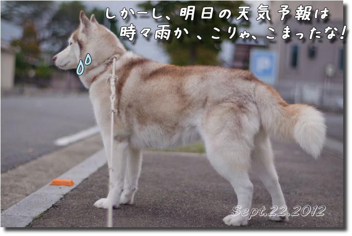 DSC_9103h2.jpg