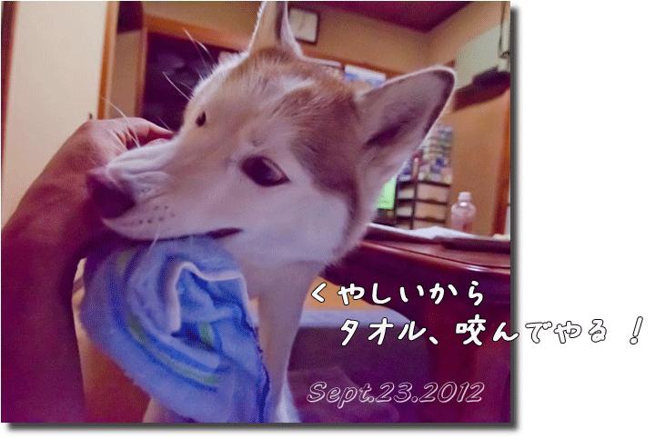 DSC_9251h1.png