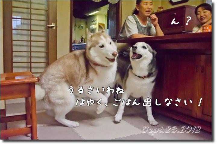DSC_9311h1.jpg