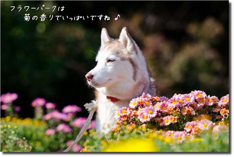 DSC_9337j1.jpg