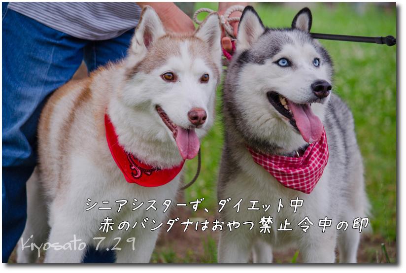 DSC_9464g1.jpg