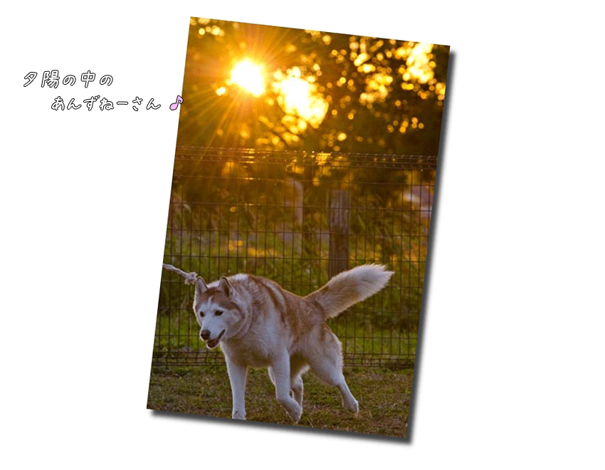 DSC_9607j1.png