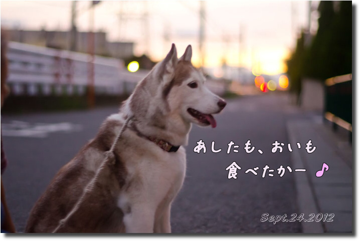 DSC_9668h1.jpg