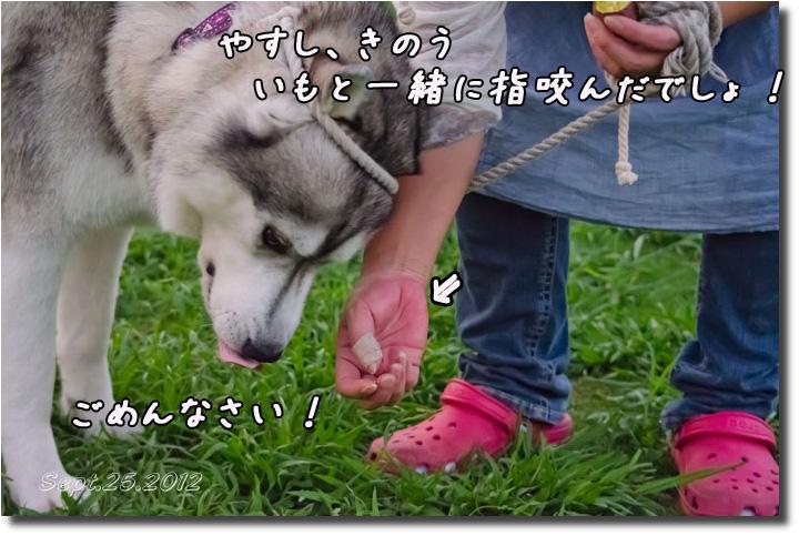 DSC_9781h1.jpg