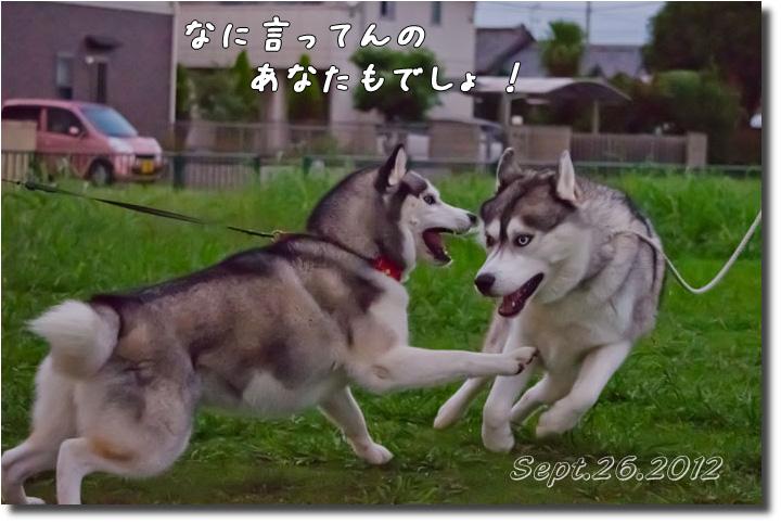 DSC_9870h1.jpg