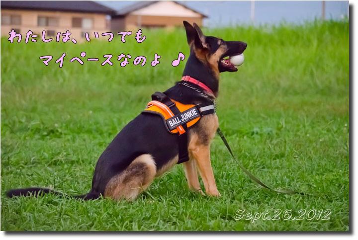 DSC_9872h1.jpg