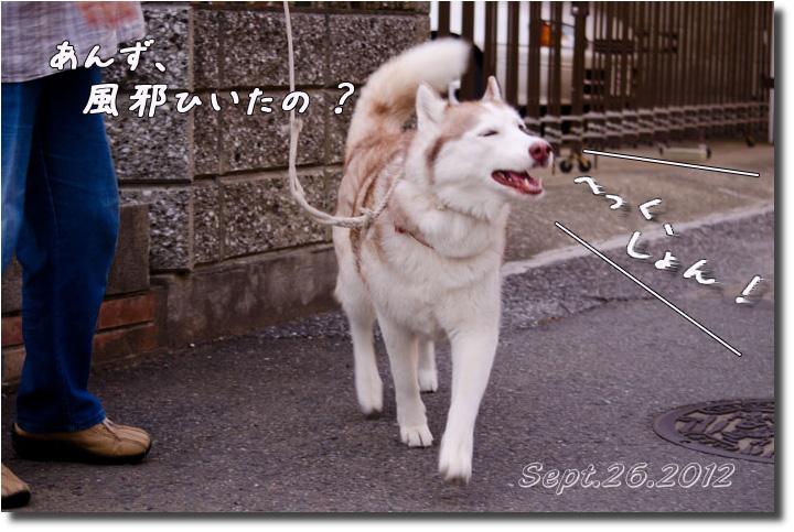 DSC_9927h1.jpg