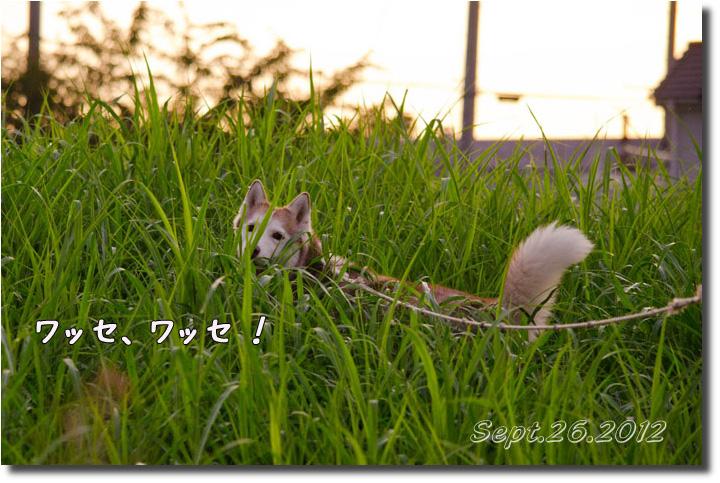DSC_9940h1.jpg