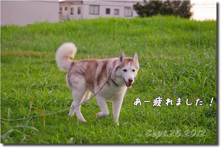 DSC_9944h1.jpg