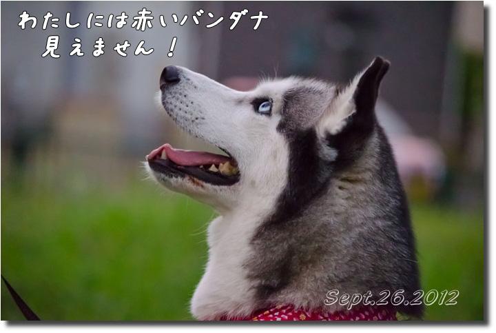 DSC_9991h1.jpg