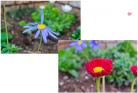 (6)お隣さんチの花が増えた~♪