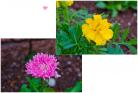 (7)春になると花がきれいです~♪