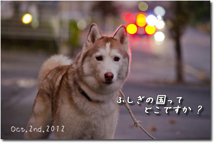 _DSC1227j1.jpg