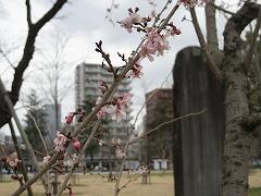 nishi2012.3.31_2