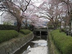 七郷堀2012.4.22-1
