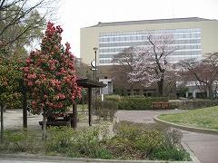 七郷堀2012.4.22-2