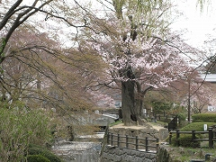 七郷堀2012.4.22-4