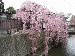 七郷堀2012.4.22-6