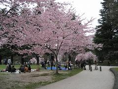 錦町公園2012.4.22.