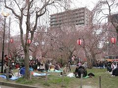 榴岡公園2012.4.22-2