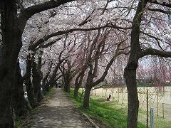 仙台一高2012.4.24-2