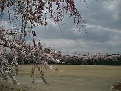 仙台一高2012.4.24-3