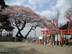 愛宕神社2012.4.24-2