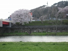 広瀬川流域2012.4.24-1