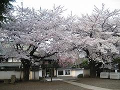 松音寺2012.4.24-1