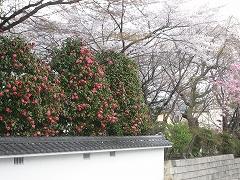 松音寺2012.4.24-2