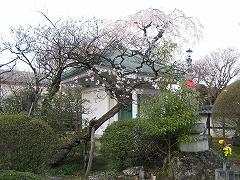 松音寺2014.4.24-5