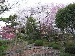 松音寺2012.4.24-3
