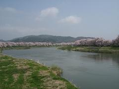 一目千本桜2012.4.25-2