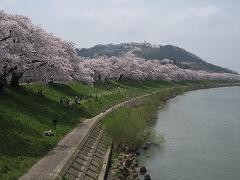 一目千本桜2012.4.25-7