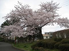 榴岡公園2012.4.25-4