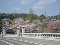 青葉山公園2012.4.28-1