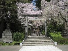 大崎八幡宮2012.4.28