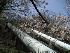三居沢2012.4.28-2