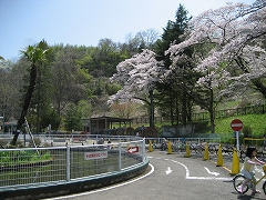 三居沢2012.4.28-4