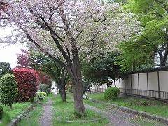 新寺小路緑道2012.5.6