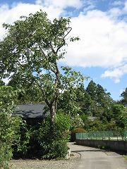 igune-5