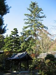 shifukuji2