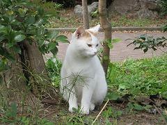 小松島公園1