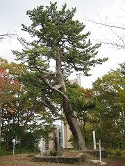 小松島公園3